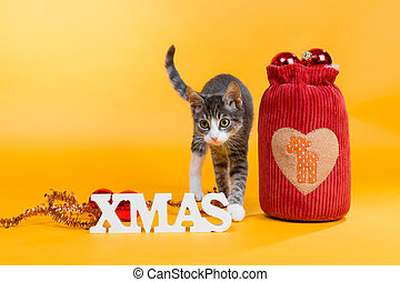 sweetest kitten - with santas bag - little cat in christmas...