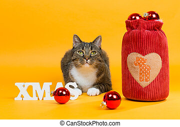 dream cats - i have santas bag - tiger cat in christmas...
