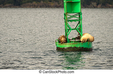 Sea Lions Slumber Ocean Buoy Reserrection Bay Sea Wildlife