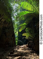 Tropical undergrowth with large tree ferns growing on the...