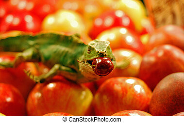 The lizard and the cherry - vegetables and fruits at the...