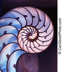 Cut away of Nautilus shell on magic background - Cut away of...