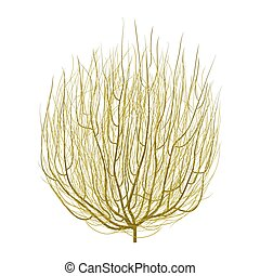 tumbleweed - isolated dry brown realistic round tumbleweed