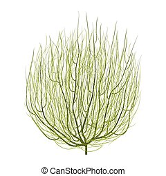 green tumbleweed - isolated dry green round tumbleweed