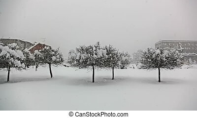Heavy snowing in Zagreb - Heavy snowing and trees in Zagreb,...