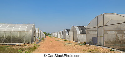 Greenhouses in a farm