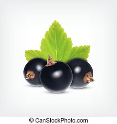 Black currant - Berries of black currant with green leaf...