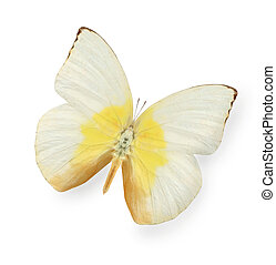 Yellow and beige butterfly isolated on white nackground