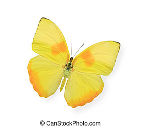 Yellow butterfly isolated on white - Yellow butterfly...