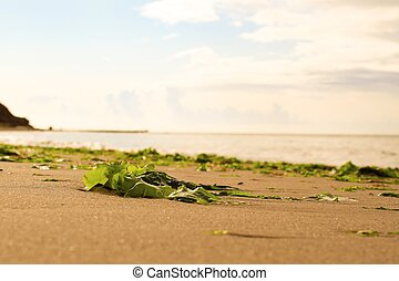 Natural Litter - Seaweed on a beach