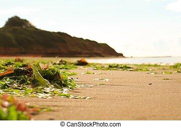 Natural Litter - Seaweed littering an empty beach