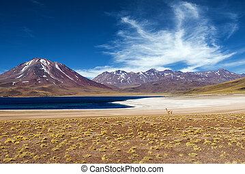 Lagoon in the Atacama Desert - The Miscanti Lagoon in the...