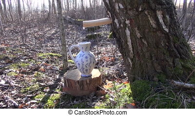 Birch tree sap dripping in jug - Birch tree sap dripping in...