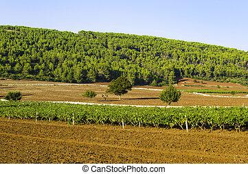 Puglia, italiano, vino
