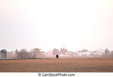 girl walking in field - Amish or Mennonite girl walking...