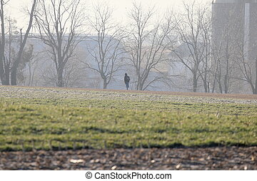 girl in field - Amish or Mennonite girl walking in a farm...
