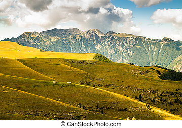 Meadows in the mountains create sinuous lines - View of...