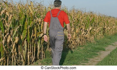 Farmer and corn field