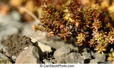 Shrubs in spring - Red and brown shrubs in strong wind