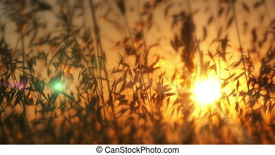 sunset grass 4k
