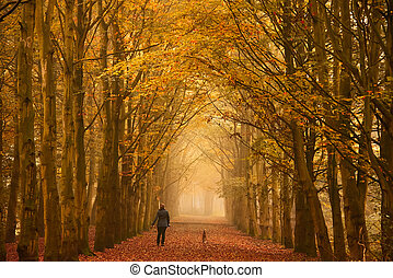 Sunday morning walk in autumn - Woman walking with her dogs...