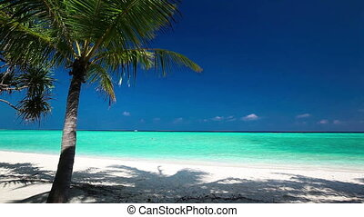 Palm trees over tropical beach - Palm trees over tropical...