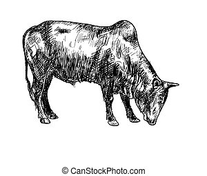 Drawing of ox