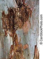 eucalipto,  close-up, árvore, tronco