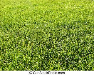 lawn freshly mowed - background green lawn freshly mowed...