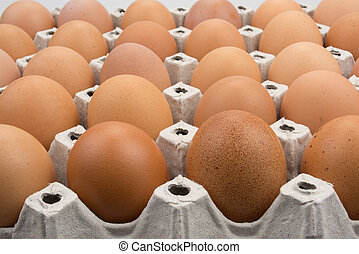 Food - Row of chicken eggs in theirs paer container.