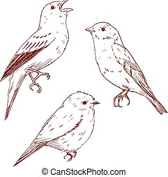 Nice vector hand drawn birds - Beautiful vector image with...