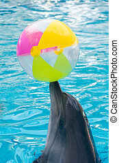 cute dolphin playing ball in dolphinarium, Skadovsk, Ukraine