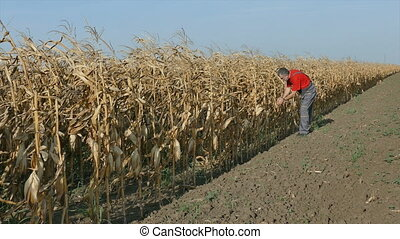 Farmer in  corn field