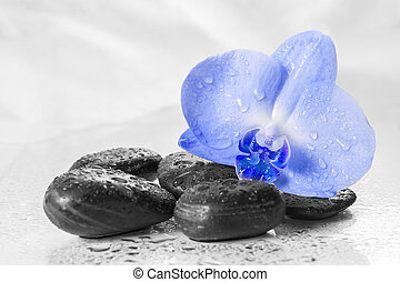 Blue orchid with reflection in water on light background