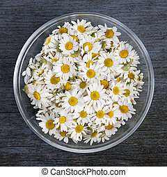 Chamomile flowers in bowl - Fresh medicinal roman chamomile...