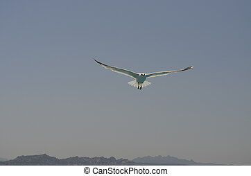 Seagull in the sky - A picture of a seagull in the sky...