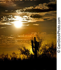 arizona desert landscape - arizona at sun down