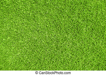 Green grass background. Detail view