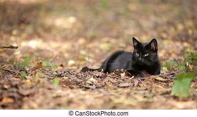 Young Black Cat is Resting in the Forest