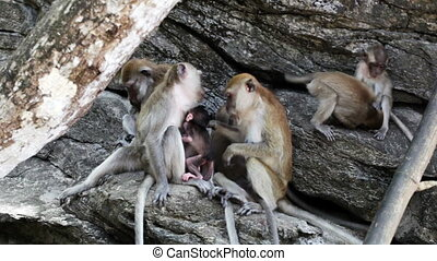 Family of macaques relaxing on logs outdoor - Several...