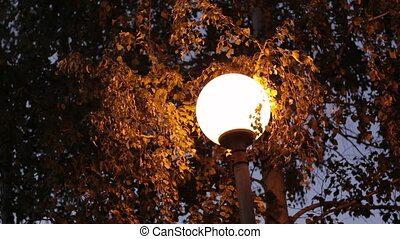lamp inTrees in the park at night - Trees in the park at...