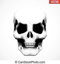 Human skull in sketch style. Illustration isolated on white...