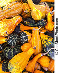 Colorful variety of gourds and squashes