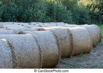 several rolled hay bale at rural meadow