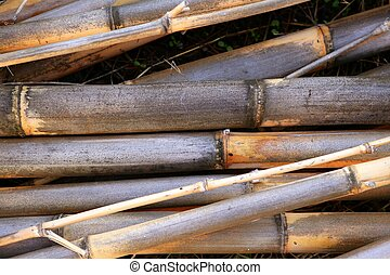 Cane background texture dried river canes used for firewood