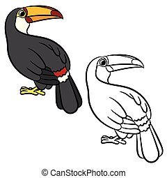 Toucan bird illustration Coloring page Vector