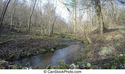 rocky stream in forest - forest scene with soft flowing...