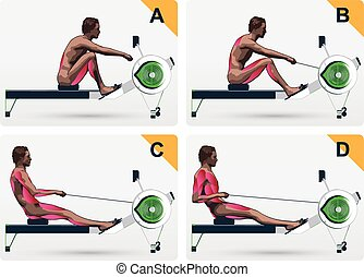 Muscle work on rowing macine