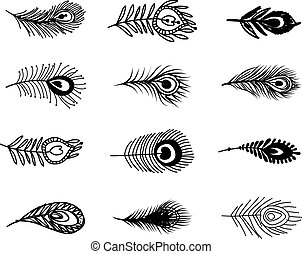 Peacock feather set for your design. Vector illustration