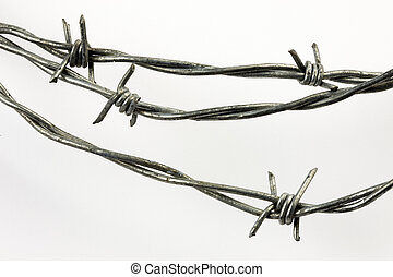 Barbed wire - Close-up shot of barbed wire shot on white...